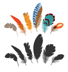 bird feathers vector image