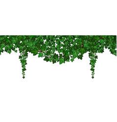 Ivy foliage garland green climbing and hanging vector