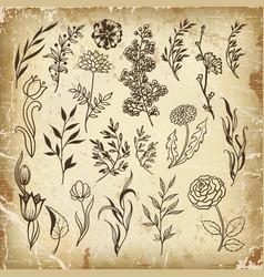 set plants doodle herbs vector image