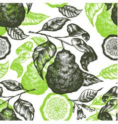 bergamot branch seamless pattern hand drawn fruit vector image