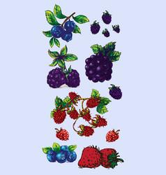 digital detailed fruit hand drawn vector image