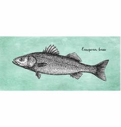 ink sketch of european bass vector image