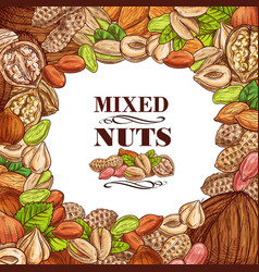 Poster nuts and fruit seeds vector