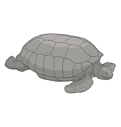 Turtle draw vector