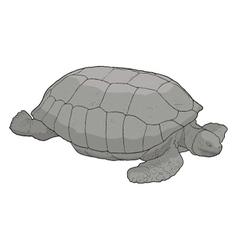 Turtle draw vector image