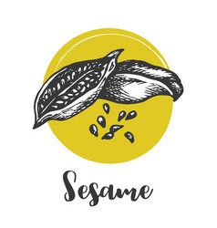 sesame seed drawing hand drawn food vector image
