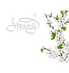 Cherry spring branch vector