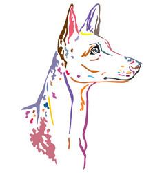 Colorful decorative portrait ibizan hound dog vector
