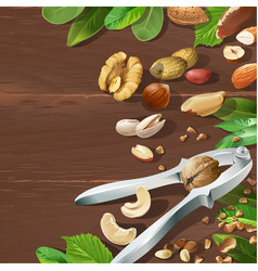 nutcracker and nuts vector image