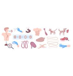 Helminth parasite flat set vector