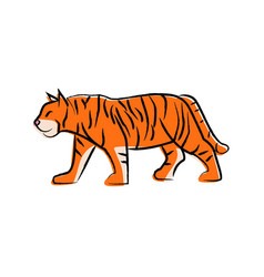 outline draw tiger vector image