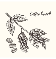 Coffee branch with berry Hand drawn vector image