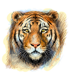 tiger sketchy colorful hand-drawn portrait vector image