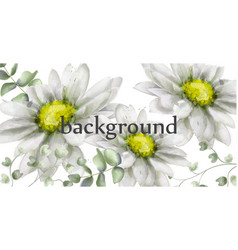 white daisy flowers background watercolor vector image