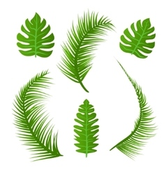 set of summer plant decoration Green palm vector image