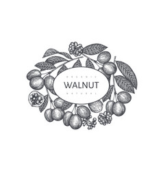 Hand drawn sketch walnut design template organic vector