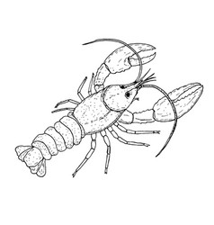 lobster wildlife animal vector image