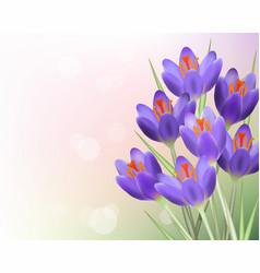 purple tulip flowers background vector image