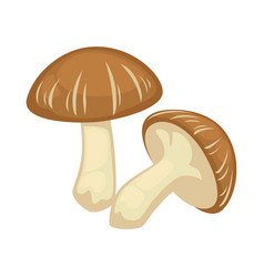 Two shiitake mushrooms on white background vector