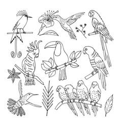 tropical bird vector image