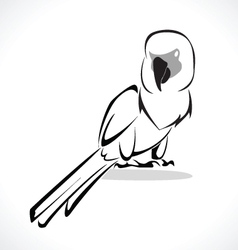 parrot 2 vector image vector image