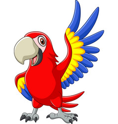 cartoon macaw waving vector image