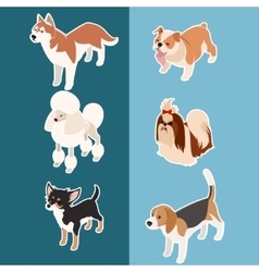 Collection of isometric dogs3 vector image
