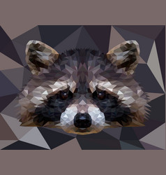 Polygonal raccoon isolated on white low poly vector
