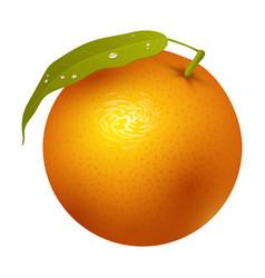 ripe orange fruits 3d citrus sweet food realistic vector image
