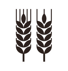 wheat grain icon vector image