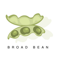 broad bean pod infographic with vector image vector image