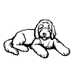goldendoodle dog - isolated vector image
