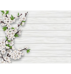 Spring cherry branch on white old wood background vector