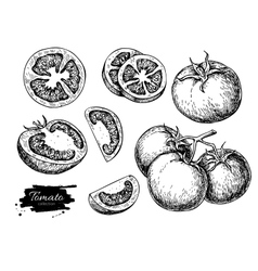Tomato drawing set isolated sliced vector
