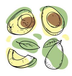 Avocado fruit delicious fruit sketch vector