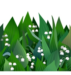 Blossoming lilies of the valley flowers and leaves vector image