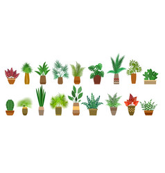 Pot plants interior decorations vector