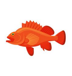sea perch fish fresh aquatic sea fish species vector image