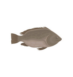 Small sea or river fish with brown fins marine vector