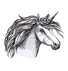 unicorn horse with horn sketch of magic animal vector image