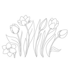 coloring page collection flowers of the tulip vector image