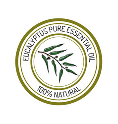 eucalyptus essential oil label aromatic plant vector image