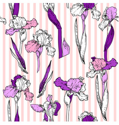 hand drawn iris vector image