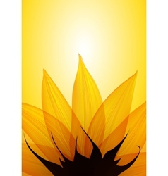 sunflower part vector image