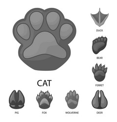 Wildlife and trace symbol vector