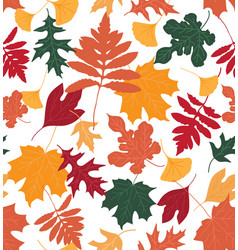 colourful leaves vector image