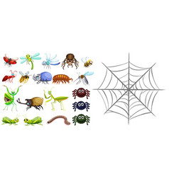 different types of bugs and spiderweb vector image