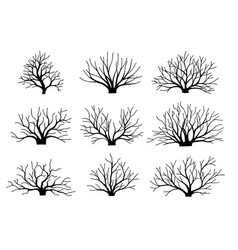 image bushes without leaves set autumn vector image