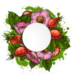 rosehip flowers and berries vector image
