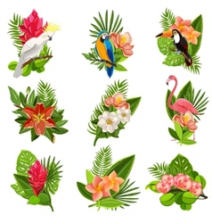 Tropical birds and flowers pictograms set vector